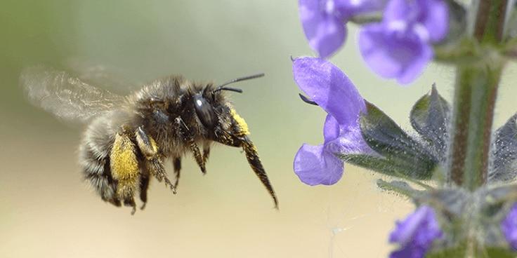 Lees meer over biodiversiteit bij Albert Heijn.