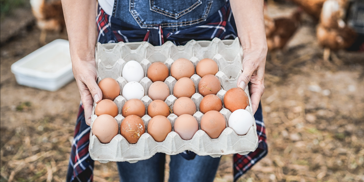 Biologische eieren van Albert Heijn
