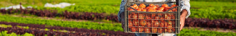 Bij Albert Heijn doen we er alles aan om voedselverspilling te bestrijden