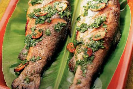 forel recept oven